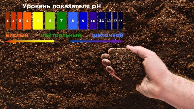 Кислотность почвы и ее влияние на растения